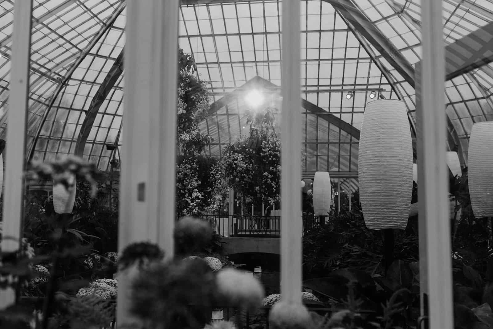 spotlight in a greenhouse