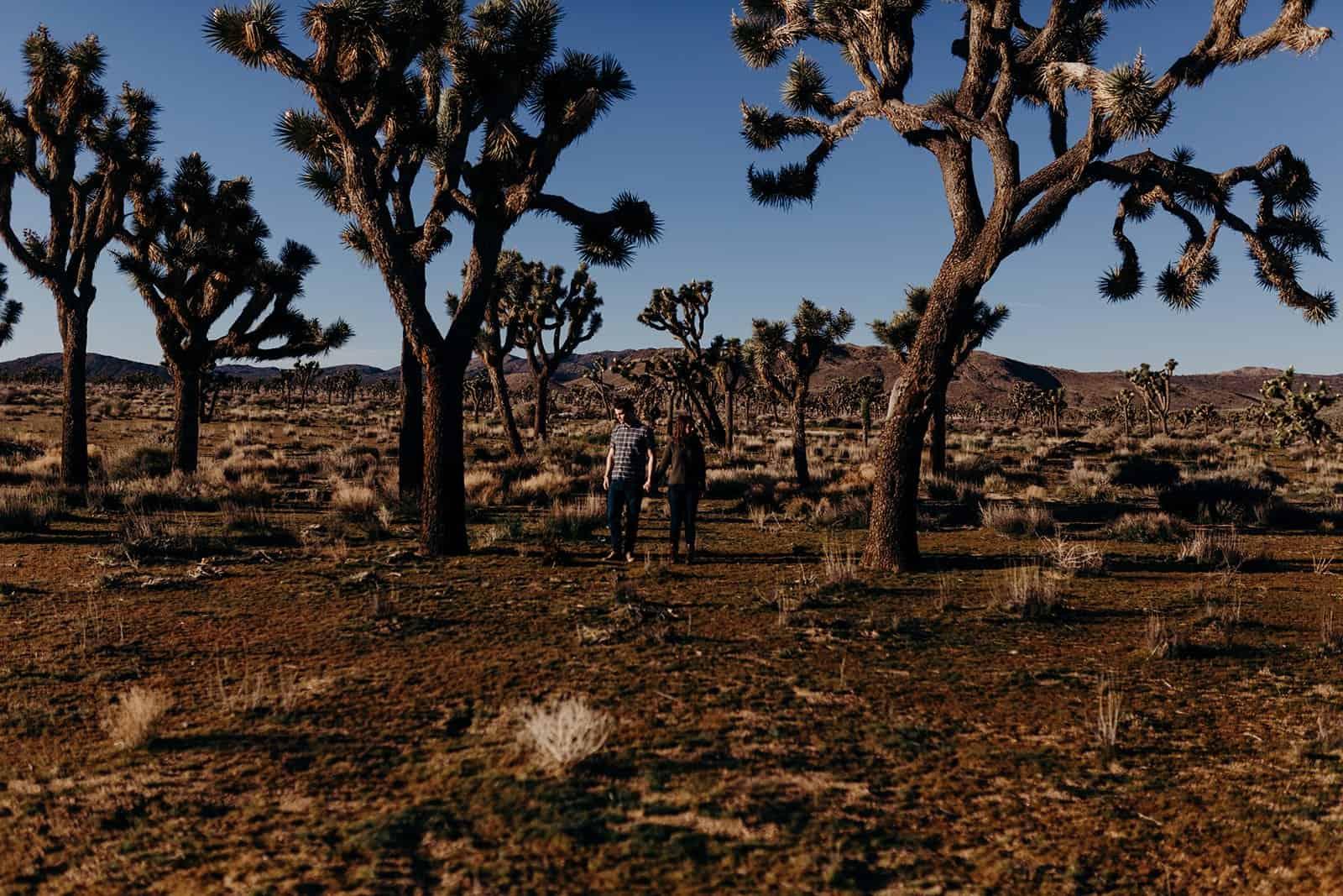 couple wandering through Joshua Trees