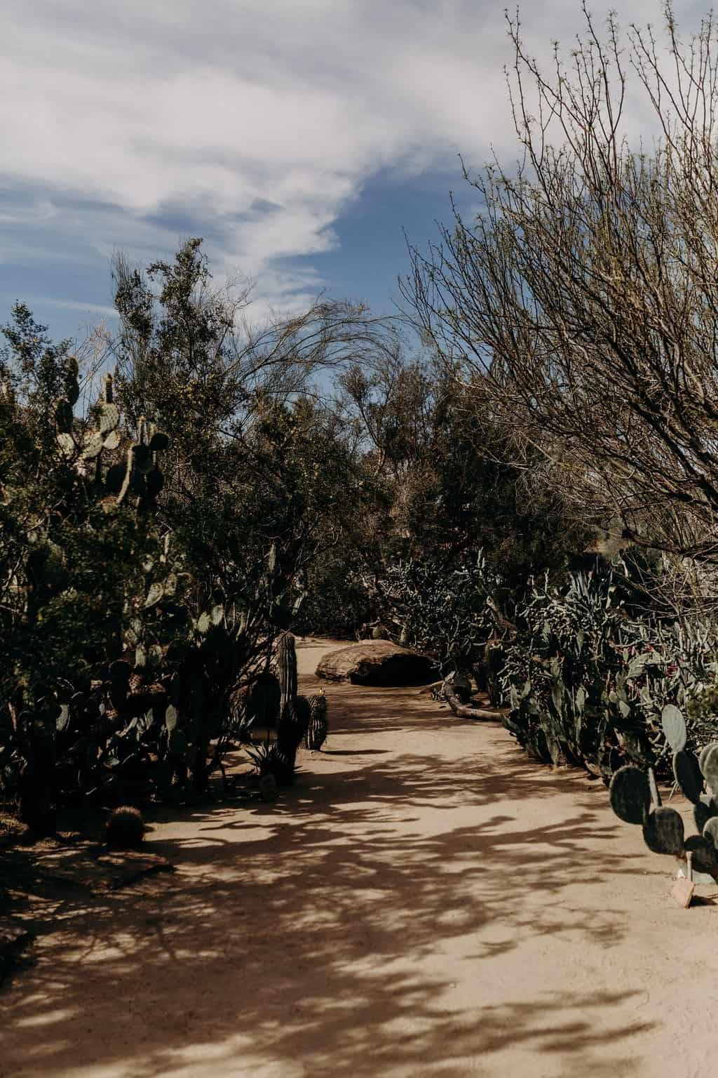 trail of cactus at moorten botanical gardens