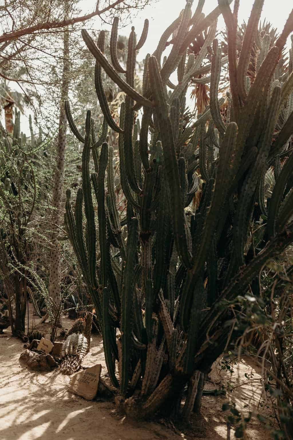 Cactus at Moorten Botanical gardens
